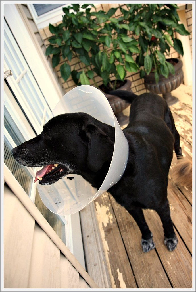 cone of shame 3