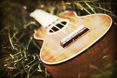 Ukulele Improved (greenwatermelon) Tags: music texture 35mm ukulele coffeeshop instrument f18 d40
