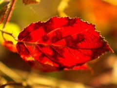 Hot summer (vim2009) Tags: nature leaves leaf zakarpattia artofimages