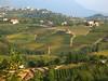 le colline del collio sloveno