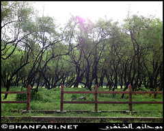 Wadi Darbat, Dhofar (Shanfari.net) Tags: flowers plants nature al natural ericsson sony greenery cave oman salalah  sultanate dhofar  khareef  haq  diplopoda     taqah    governate  madeinat  darbat taiq c905  raythut