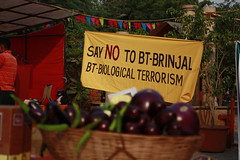 No to Bt Brinjal