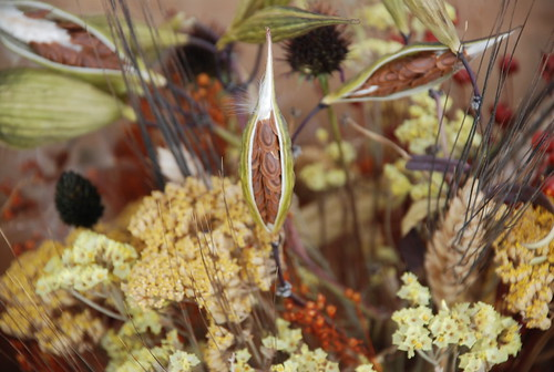 milkweed at the Camden Farmers' Market