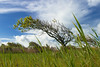 Green Landscape (Fabi Fliervoet) Tags: wood sky holland tree green nature netherlands dutch grass landscape europe groen view wind scheveningen dunes stock thenetherlands meadow denhaag swamp vista gras marsh nl swept grassland duinen fabifliervoet