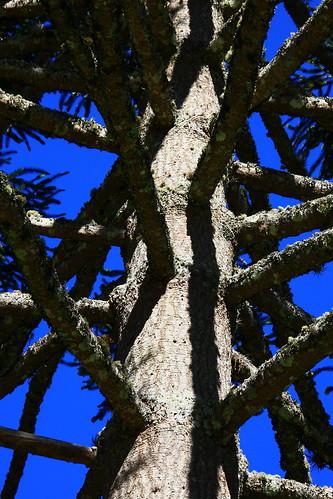 branches brazil São Francisco Xavier SP tree travel