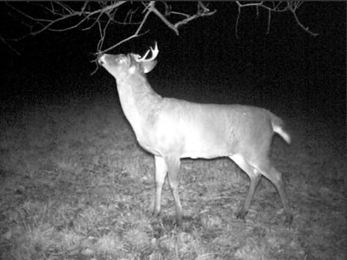 buck home field 7