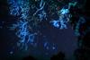 The ABYSS (masahiro miyasaka) Tags: blue winter white coral japan night canon stars star astrophotography sirius orion alpen abyss oneshot deepsea rimeontrees rimeice Astrometrydotnet:status=solved Astrometrydotnet:version=13573 Astrometrydotnet:id=alpha20091251969771