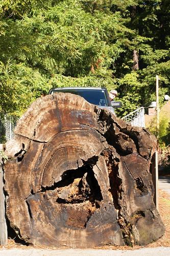 drive-on fallen log