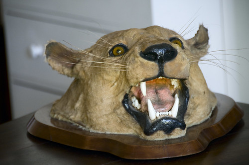 Cougar Head on a Plaque
