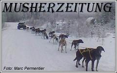 Gafsele-Schlittenhundetraining