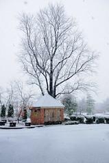Snow Scenes in Falls Church