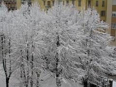 Alberi Innevati (gabriele71) Tags: schnee snow nieve sneeuw neve neige lumi nevicata laspezia snowytree fiocchi    alberoinnevato arbresenneigs luminenpuu  rbolcubiertodenieve verschneitebaum   baumschnee