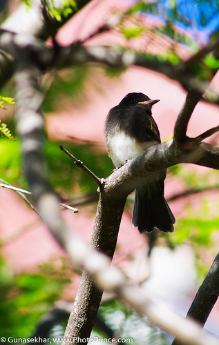 Birds-6029