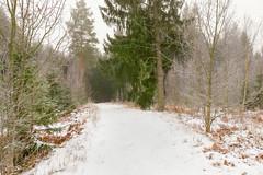 Winter Walk (Peter Vestin) Tags: nikondf sigma24mmf14dghsmart adobecreativecloudphotography topazlabscompletecollection heden karlstad värmland sweden nature landscape winter tree