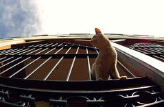 Valparaiso Cat! (Andres Medina) Tags: chile pez cat ojo valparaiso d70 gato gran 28 angular