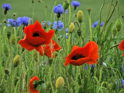 Blomster i marken