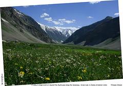 Kashmir: Valley of wild flowers (Tumkur Ameen) Tags: travel india nature kashmir ladakh balti naturephotography kargil ameen travelphotography jammuandkashmir drass ameenahmed naturetravel tumkurameen