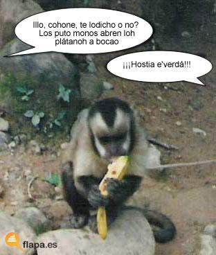 mono_platano