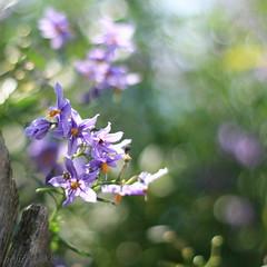 Planar Bokeh ... (_nejire_) Tags: plant flower flora bokeh explore 17 f18 frontpage carlzeiss 50faves 10faves 40faves 60faves 445pm 25faves canoneos400d fave10 planart50mm fave50 fave25 fave40 fave60 carlzeissplanart1450ze 8036535g8am no358