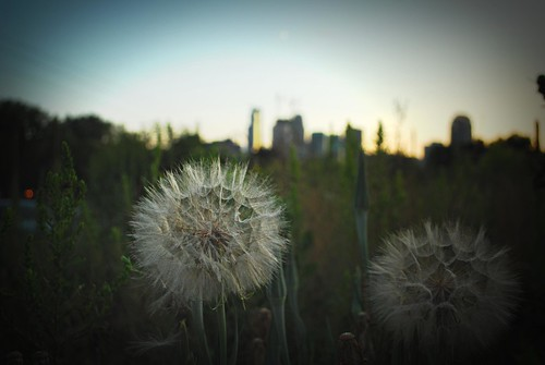 fluffy ball city bokeh
