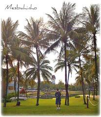 Thai (Mesbahinho) Tags: sea lake color green photo palm thai kuwait waleed q8 blueribbonwinner n82 mywinners almotar mesbahinho