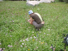 Laurie taking picture of elephants (audrey_hagen) Tags: tetons cascadecanyon paintbrushcanyon