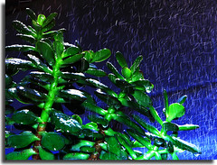 fina lluvia / fine rain (josdelgado) Tags: flowers blue flores green azul canon drops jose gotas delgado vede finerain finalluvia