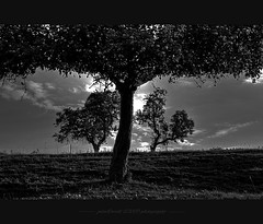 ... black and white artwork ... (oliver's | photography) Tags: trees friends blackandwhite bw nature photoshop canon germany eos flickr raw adobephotoshop image natur  adobe frame dslr copyrighted aworkofart pixelwork blackwhitephotos naturaufnahme totalphoto photographyrocks canoneos50d aplusphoto flickraward blackwhiteaward natureimage sigma1770mmf2845dchsm august2009 schwarzundweis qualitypixels flickrlovers paololivornosfriends flickraward pixelwork09photography oliverhoell theacademytreealley framephotoscape allphotoscopyrighted