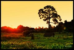 Wild Midin: Updated (jeraul75) Tags: landscape photo nikon miri sarawak