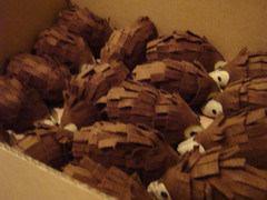 Hedgehogs boxed and waiting