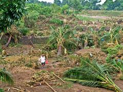 last man standing (SalingPusa) Tags: aftermath bagyo signal2 ondoy rizalcardonamorongtanay