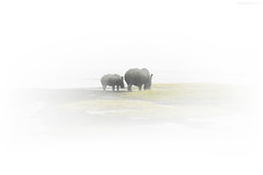 Caught in the Mist (Ben Heine) Tags: africa mist kenya rhino wildanimal rhinoceros benheine thesuperbmasterpiece
