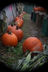 IMG_0932 (lulubrooks) Tags: sleepyhollow jackolanternblaze pumpkinblaze 20091018hudsonvalley