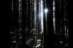 [フリー画像] [自然風景] [森林/山林] [樹木の風景]        [フリー素材]