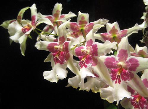 orkideat kukkakaupan ikkunassa by Anna Amnell