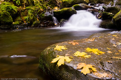 A mini falls on Multnomah creek (dedge555) Tags: green rock creek waterfall moss nikon nikkor 15seconds 2470mm 15secondexposure autumnstream d700 nikond700 2470mmf28g afsnikkor2470mmf28ged varinduo