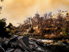 devastation (chandrika221) Tags: trees art fire burned pendeli