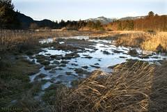 Estuary Marsh (tesseract33) Tags: world light nikon estuary squamish d300 squamishestuary