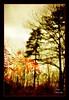 Winter Colors VI (andzer) Tags: flora nikon scout andreas explore scape 2009 zervas andzer wwwandzergr
