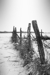 Neige barbele (B N C T O N Y) Tags: snow cold nature hiver fil neige froid barbwired barbel bnctony