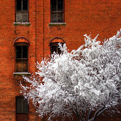 Winter Textures (ecstaticist) Tags: urban white snow canada storm tree brick texture window vertical vancouver photoshop square island hotel frozen frost bc map columbia victoria freeze ledge frame british blizzard mapping tone mapped photomatix janion upsampled tonemapping exp505 toinemapped