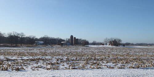 Frozen Cornfields