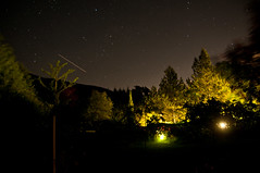stars upon the trees (keape) Tags: stella night star noche long falling notturno estella cadente