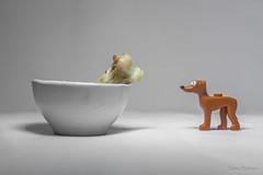 Un hueso...Por favor! (Yures) Tags: smallthings miniaturas diferente miniatures funny