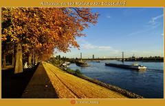 Herbst am Rhein bei Düsseldorf/Autumn on the Rhine near Düsseldorf/秋季莱茵河畔的杜塞尔多夫/الخريف صباحا راين في دوسلدورف (shaman_healing) Tags: herbst autumn düsseldorf rhein wasser flus rhine فصلالخريف 秋 himmel sky bäume trees 树木 الأشجار