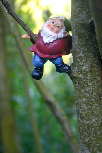 This little gnome likes hanging out in the trees