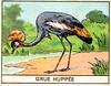 mart oiseaux118