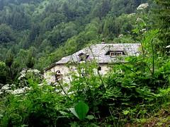 lowdown on Liboson (overthemoon) Tags: summer house forest schweiz switzerland suisse hidden greenery wildflowers svizzera maison romandie caux liboson pauldemarchie misformarchiewhobuiltthehouse 1j1t