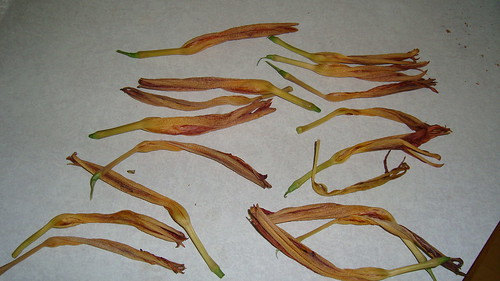 Daylily flowers used for dyebath