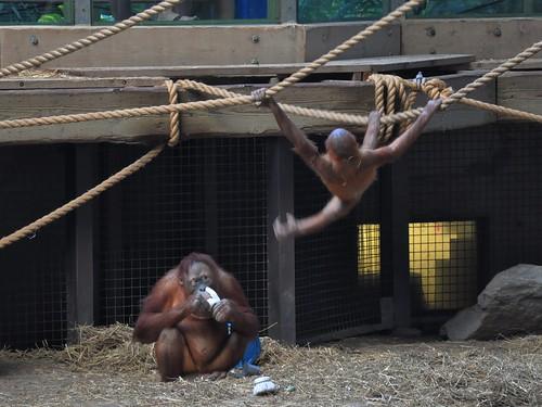 Zoo 270
